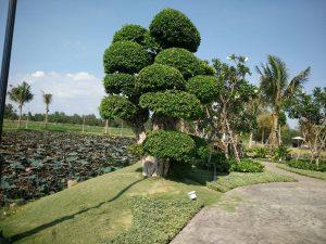 saigon garden long phước quận 9, biệt thự nhà vườn saigon garden, đất nền saigon garden long phước, nhà vườn long phước quận 9, đất vườn long phước quận 9
