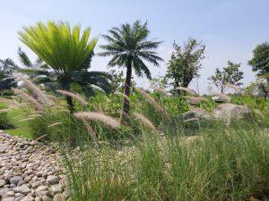 đất vườn long thuận - long phước, đất vườn ngoại ô sài gòn, review đất vườn long phước