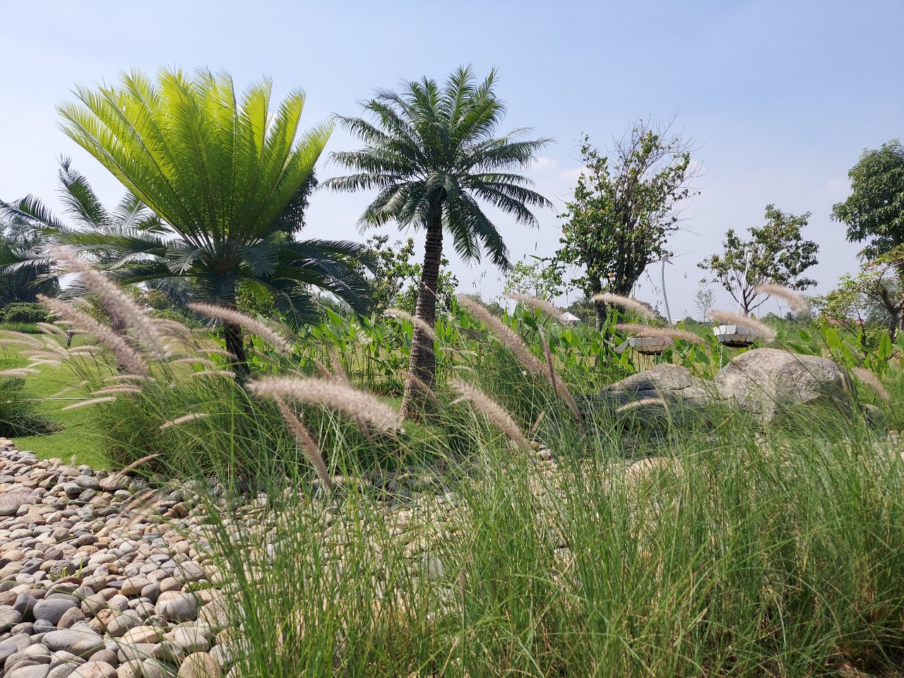 đất vườn ngoại ô sài gòn, review đất vườn long phước