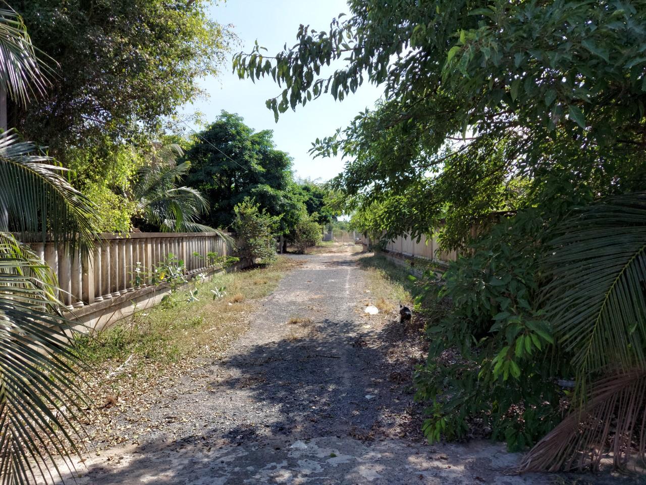 Bán 18000m2 đất vườn Long Phước, Bán 5000m2 đất đường 5 Long Phước